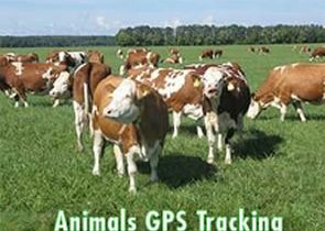 No 1. GPS Trackers for Livestock and Wildlife